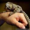 Opice Marmoset na adopciu. K