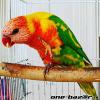 Roztomilé papagáje na adopciu.