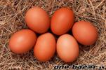 Zdravé domáce vajíčka