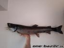 preparacia ryb