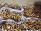 Lúpané vlašské orechy